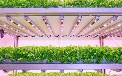 Agricoltura urbana: in Brianza il più avanzato stabilimento europeo di vertical farming